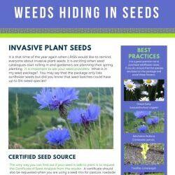 Weeds Hiding In Seeds